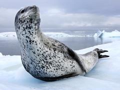 Paul Nicklen: Tales of ice-bound wonderlands