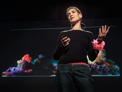 Margaret Wertheim: The beautiful math of coral