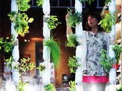 Britta Riley: A garden in my apartment