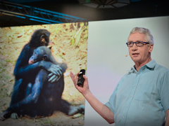 Frans de Waal: The surprising science of alpha males