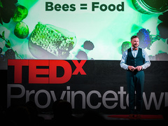 Noah Wilson-Rich: What's killing bees -- and how to save them