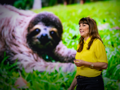 Lucy Cooke: Sloths! The strange life of the world's slowest mammal