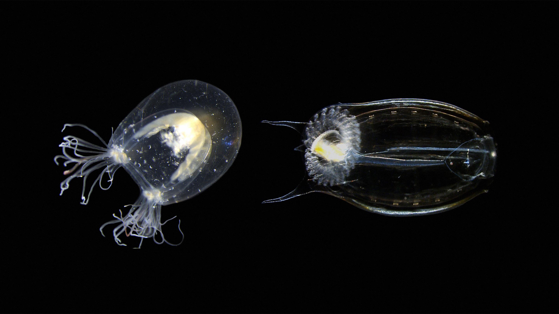 Alejandro Sánchez Alvarado: To solve old problems, study new species thumbnail